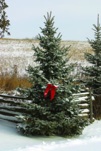 ET_1211_ChristmasTree2
