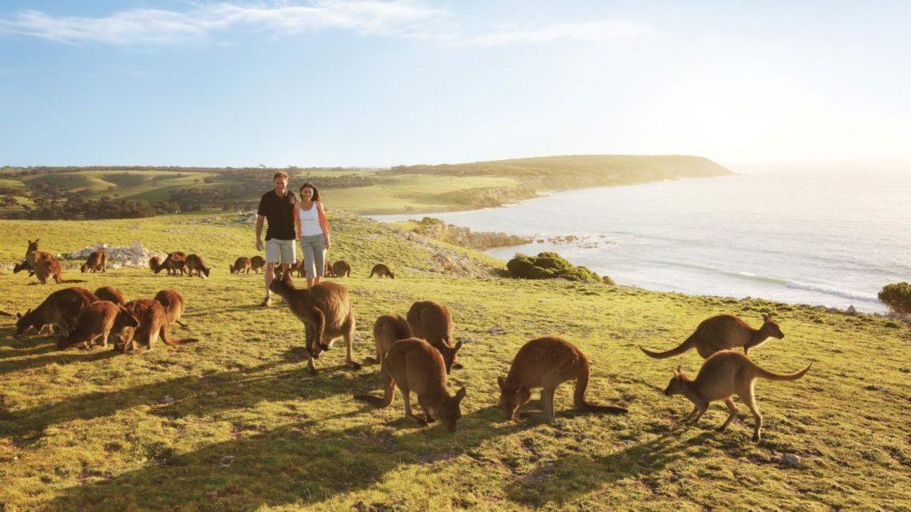 kanguru island