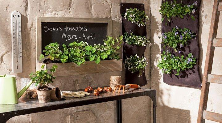 Embellir sa cuisine avec des plantes vertes mopcom for Plante pour cuisine
