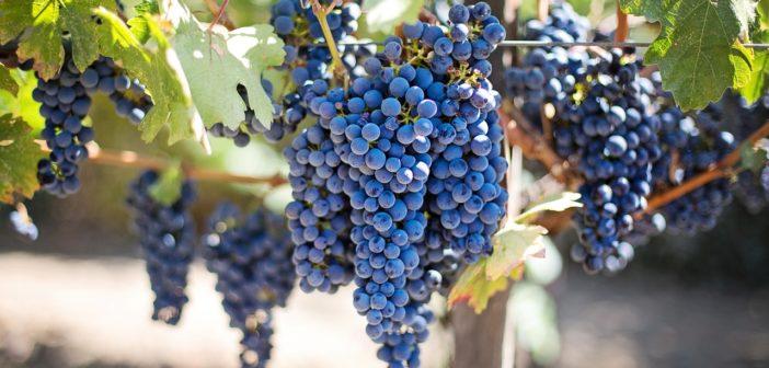 Acheter un vignoble en Alsace