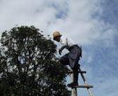 Quelles sont les techniques pour bien prendre soin des arbres ?