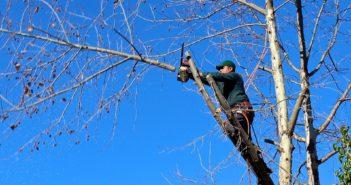 Quelles sont les meilleurs périodes pour élaguer les arbres ?
