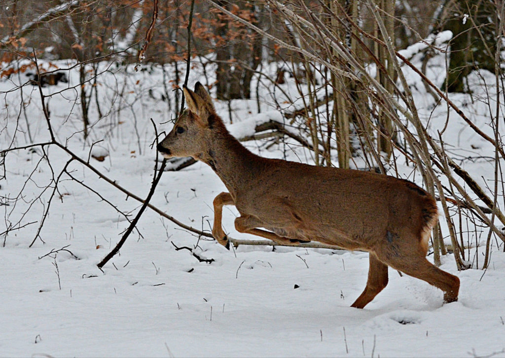 chasse-gros-gibier