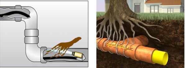 Comment identifier l'obstruction d'une racine d'arbre au niveau de vos tuyaux